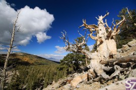 Great Basin National Park Fotogalerie