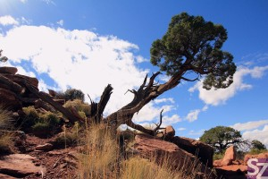 Canyonlands National Park - GO2USA